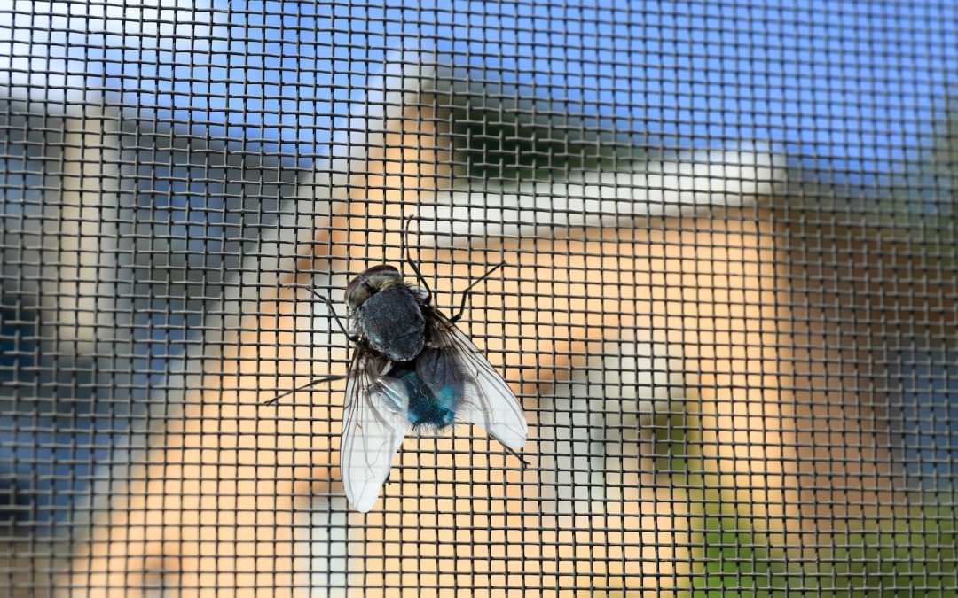 Window Screens Keep the Pests Out